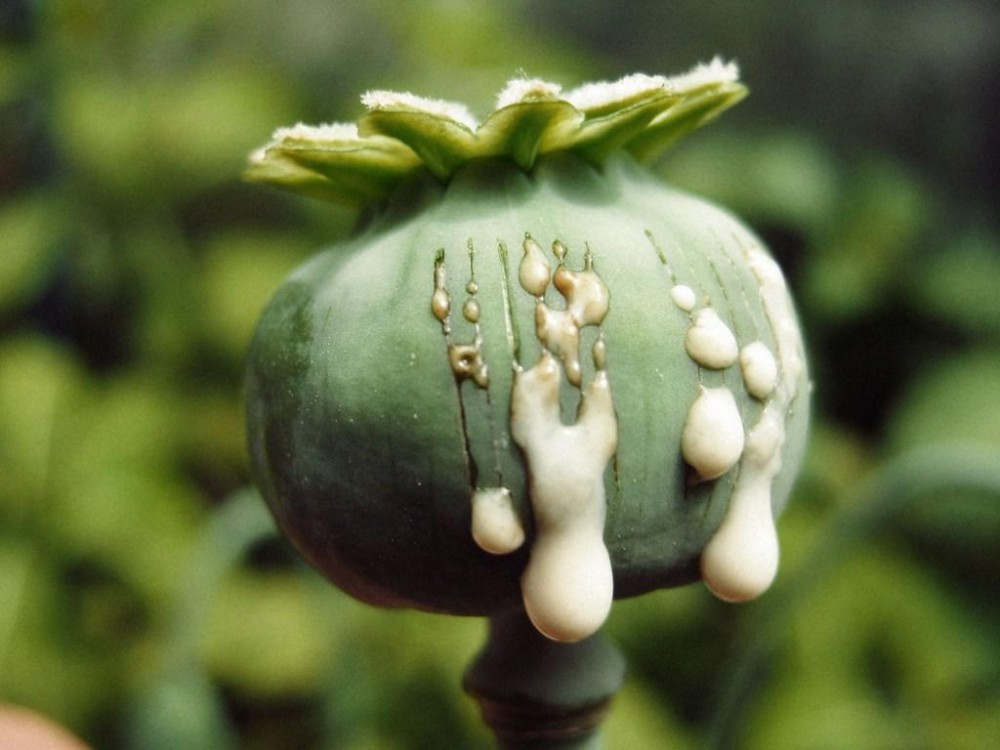 Carcinogenicity of Opium Consumption was confirmed by the International Agency for Research on Cancer