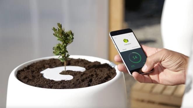 با گلدان ابداعی جدید بقایای مردگان به گیاه تبدیل میشود!