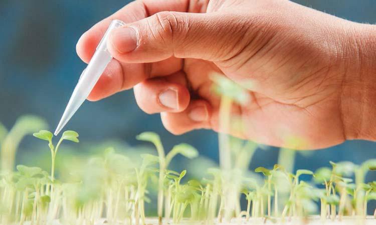 معرفی شش محصول نانو فناوری کشور در کشاورزی  و صنایع غذایی