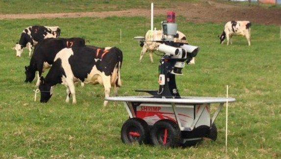 گاوچرانی یک ربات در مزارع استرالیا