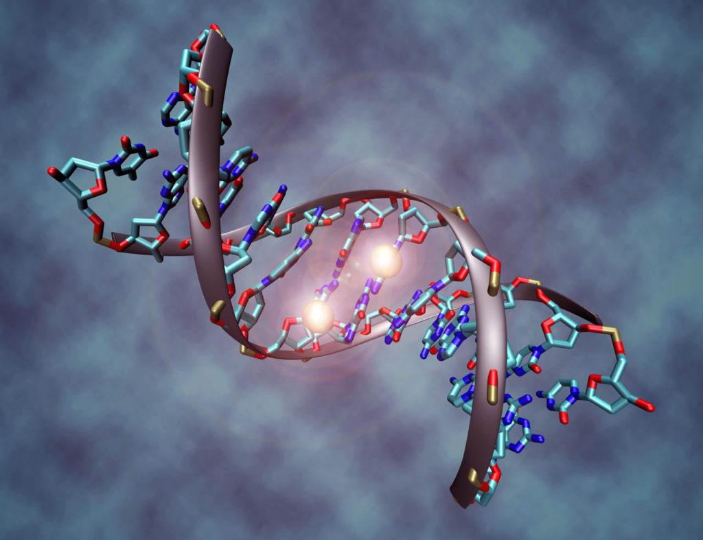 مدل سفر پروتئینها در بدن اصلاح شد