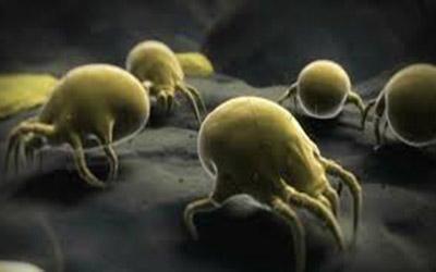 غلبه دانشمندان بر سه بیماری عفونی مرگبار در جهان