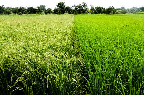 آزادی واردات، ممنوعیت تولید، نتیجه مصوبه ضد فناوري تراریخته کمیسیون کشاورزی
