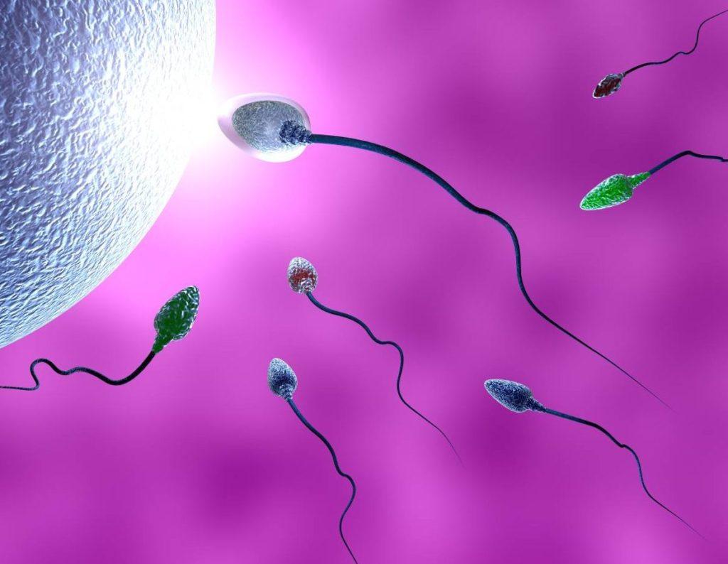ویتامین E نقش موثری در اسپرمزایی و باروری مردان دارد