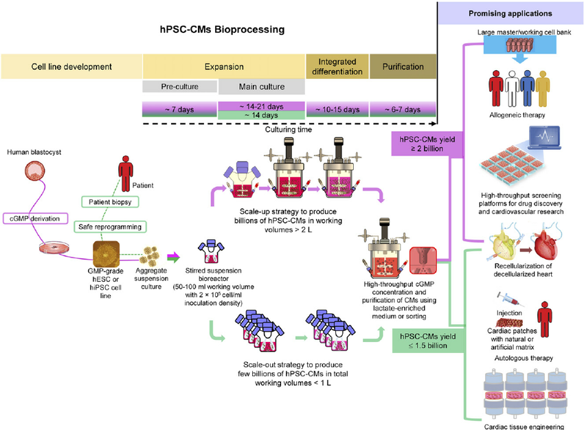 figure-7-an-integrated-robust-bioprocessing-platform-for-large-scale-production-of
