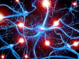 انجمن نقشهبرداری مغز تشکیل میشود