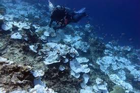 سامانه فراداده های اقیانوس شناسی راه اندازی شد