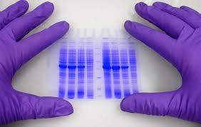 کارگاه فناوریهای نوین ویرایش ژنوم برگزار میشود