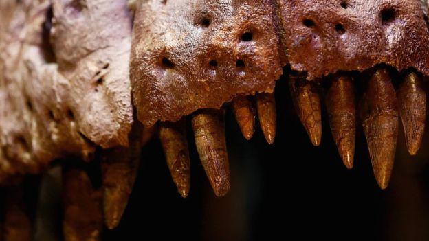 دایناسورها هم «دندان شیری» داشتند!