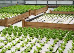 «باغچه هوشمند سبزی خانگی» برای خانوادههای ایرانی/کشت سبزیجات بدون سموم