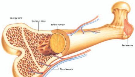 ساخت جایگزینهای استخوانی سه برابر مقاومتر به شکستگی در کشور
