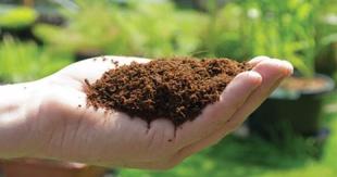 شناسایی ۴۰۰ گونه «باکتری بومی» برای پایداری کودهای زیستی در ایران