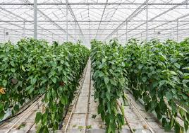 هوشمندسازی گلخانهها با همکاری سه مرکز علمی