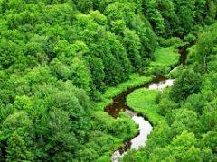 «جنگلهای هیرکانی» ۴۰ میلیون ساله، چند گام تا ثبت جهانی