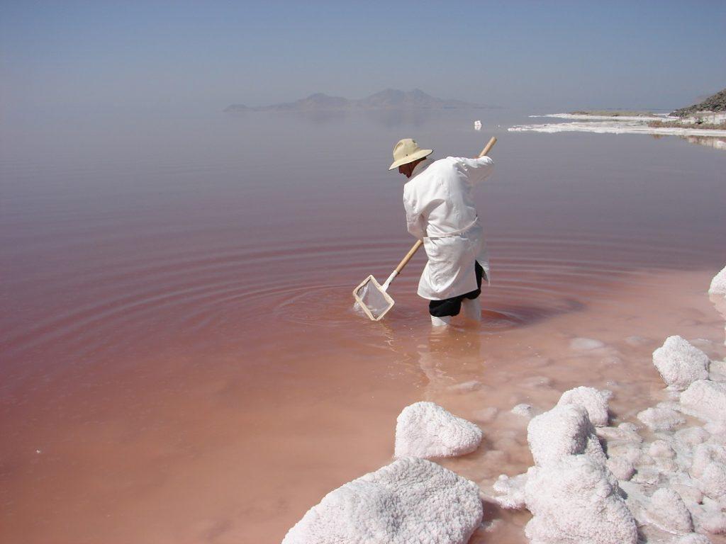 آخرین وضعیت آرتمیا و تنوع زیستی دریاچه ارومیه