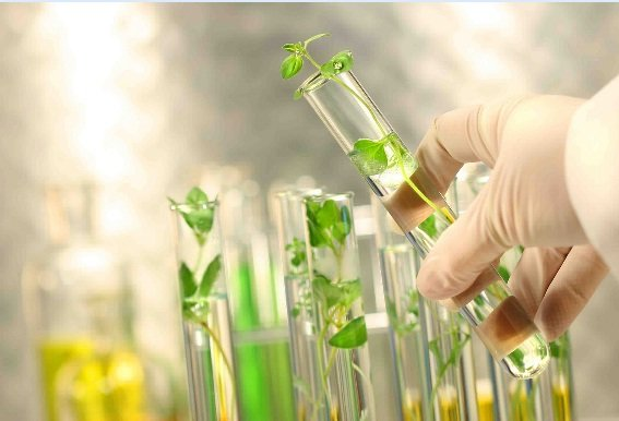 صندوق حمایت از شرکتهای دانشبنیان کشاورزی تشکیل می شود