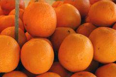 تولید پرتقال زودرس «نیوهال ناول» توسط پژوهشگران کشور