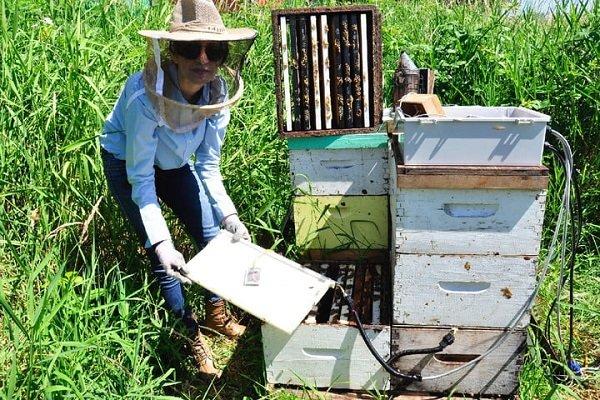 شنود گفتوگوهای زنبورهای عسل توسط یک محقق ایرانی!