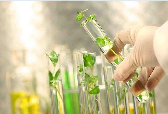 اجرای ۱۴ طرح جدید کشاورزی با کمک صندوق حمایت از پژوهشگران و فناوران