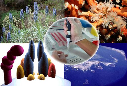پشتیبانی از ۲۰۴ طرح تحقیقاتی جدید در صندوق حمایت از پژوهشگران تصویب شد