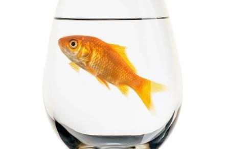 زنده ماندن ماهی قرمز زیر یخ با تولید الکل!