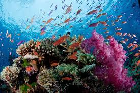 اولین همایش بینالمللی اقیانوس شناسی غرب آسیا در ایران برگزار میشود