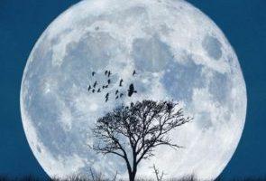 با ماه گرفته از استرالیا تا فرانسه