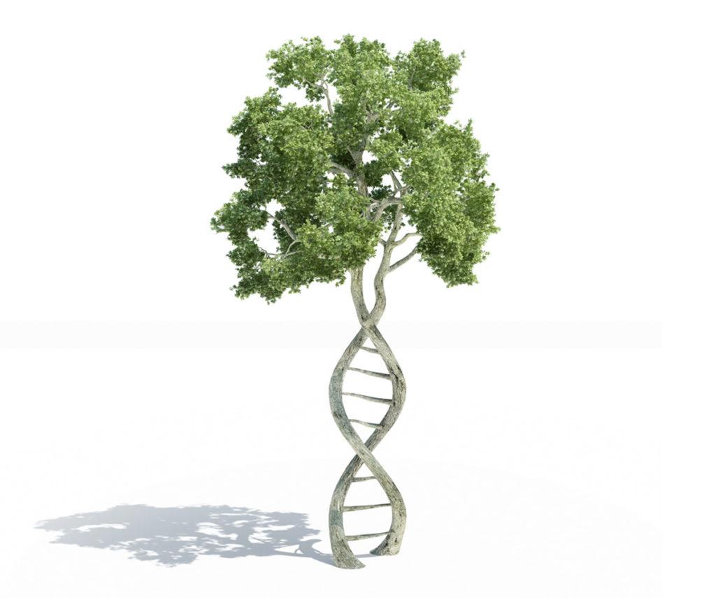 فعالیت مجدد کمیته متناظر کدکس غذاهای حاصل از بیوتکنولوژی