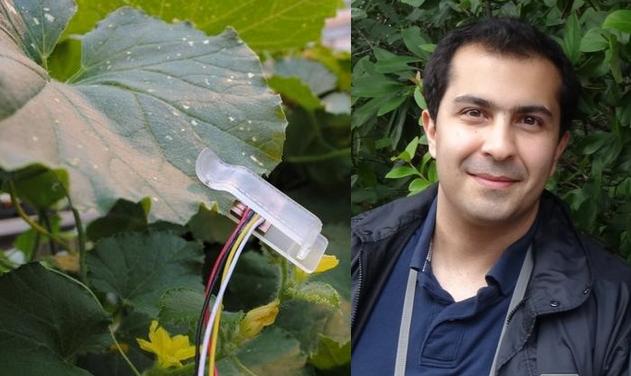 فریاد گیاهان تشنه با اختراع دانشمند ایرانی به گوش کشاورزان رسید!