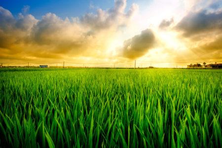 نتایجی از نشست لنست در تهران: هر درجه افزایش دمای جهانی، میزان تولید برنج را ۱۰ درصد کاهش می دهد