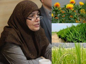 راه اندازی مرکز رشد بیوتکنولوژی کشاورزی در رشت