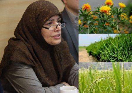 رییس پژوهشگاه بیوتکنولوژی کشاورزی خبر داد: تولید برنج متحمل به کم آبی/ایجاد نخستین مرکز رشد بیوتکنولوژی کشاورزی/تولید گلرنگ حاوی امگا ۳ در روغن با مهندسی ژنتیک