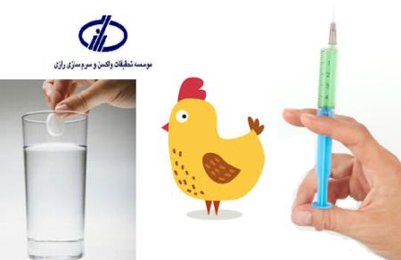 موسسه رازی اعلام کرد: واکسیناسیون پرندگان با «قرص جوشان» به جای «آمپول»!