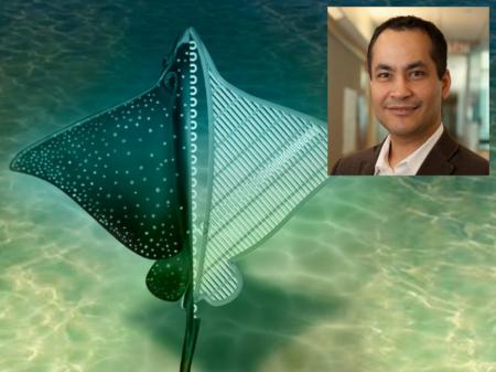 ساخت ربات نرم با الهام از سفره ماهی به رهبری دانشمند ایرانی UCLA