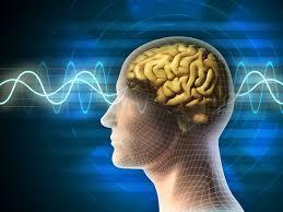 ۳۰ انجمن علمی مغز و شناخت در مراکز دانشگاهی کشور راهاندازی شد/ برگزاری هفته آگاهی از مغز