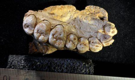 انسان، ۴۰ هزار سال زودتر از تصور از آفریقا مهاجرت کرده است