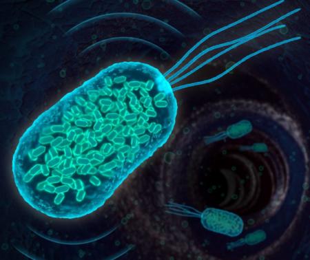 تصویربرداری پزشکی به کمک باکتری ها!