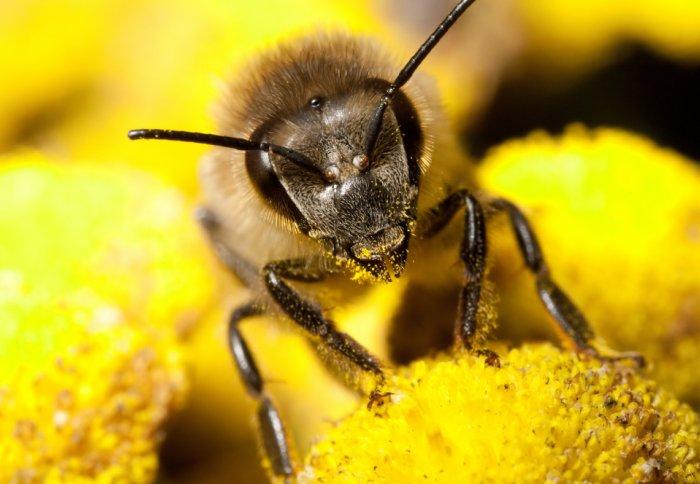 در طرح برتر جشنواره خوارزمی: رفتار کلونی های زنبور عسل با کمک ملکه های ایرانی بهبود یافت