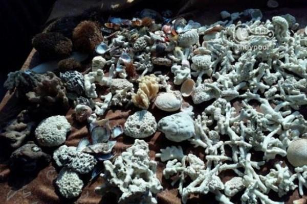 تولید نانوساختارهای سرامیکی از جنس دندان و صدف دریایی توسط محققان کشور