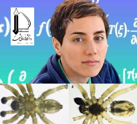 کشف و ثبت جهانی گونه جدید «عنکبوت» از ایران به نام «مریم میرزاخانی»