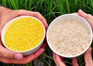 برنج تراریخته در بازار استرالیا و نیوزیلند/رفع کمبود ویتامین A با مصرف برنج طلایی!