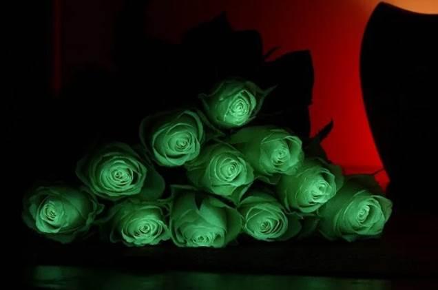تولید گلهای شاخه بریده و گلدانی شبتاب