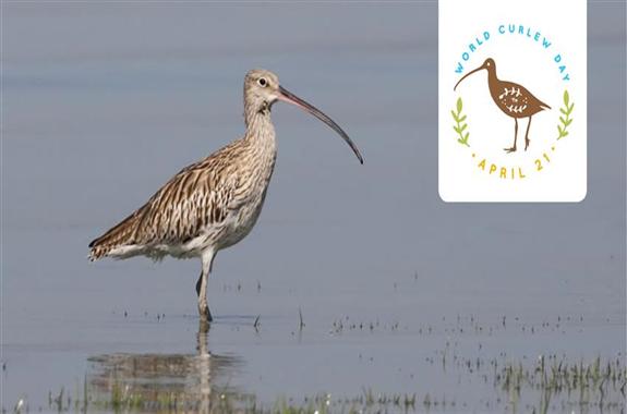 ثبت روز جهانی «پرندگان کنار آبزی» در تقویم محیط زیست