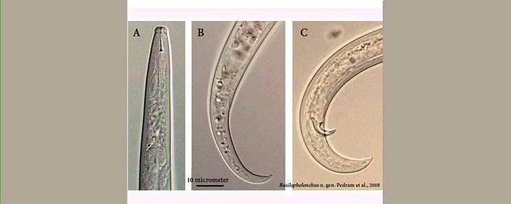 کشف چهارمین جنس نادر از نماتدها در کشور