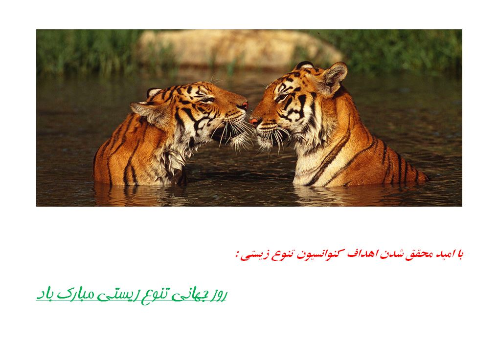 اول خرداد، روز جهانی تنوع زیستی/ جشنی برای ۱٫۷۵ میلیون گونه جانداران