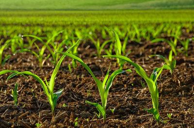 نتایج تحقیقات پژوهشگران کشور : بررسی تأثیر استفاده بیش از اندازه نانومواد بر گیاه لوبیا