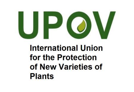 در نشست تخصصی انجمن های علمی تاکید شد: زیانبار بودن الحاق به کنوانسیون «حفاظت از واریته های جدید گیاهی»
