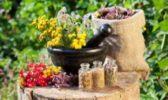 برخی داروهای گیاهی ممکن است شیمیدرمانی را مختل کنند
