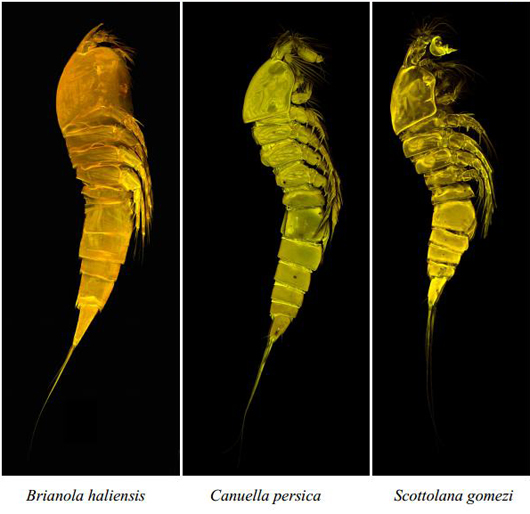 کشف سه گونه جدید جانوری در خلیج فارس و دریای عمان توسط پژوهشگران ایرانی
