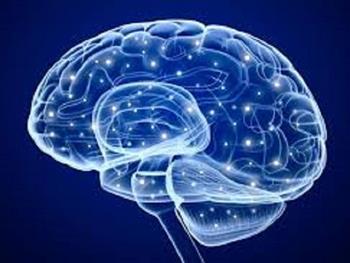 """ساخت نرم افزار تشخیص """"نوع نورون در داخل قشر مغز"""" توسط پزوهشگران کشور"""